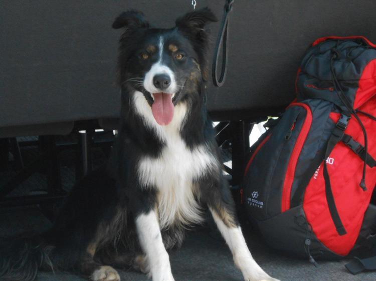 Vacanze con il cane!