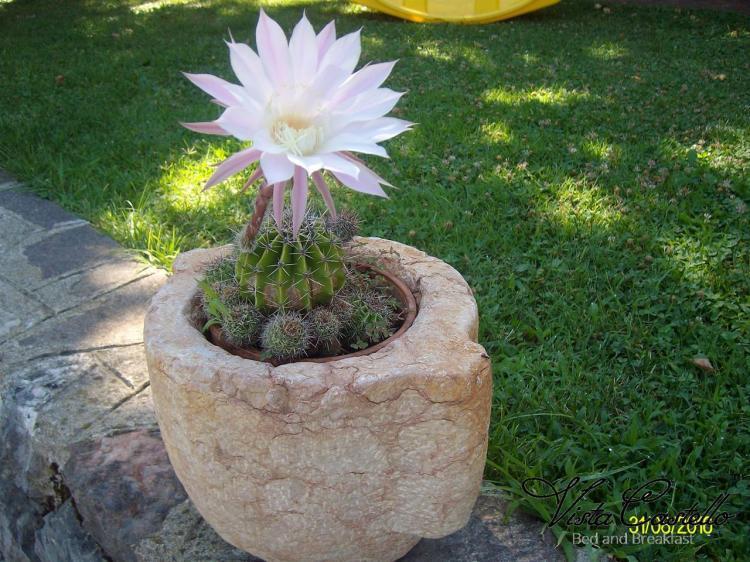 Fiore in giardino - B&B Vista Castello