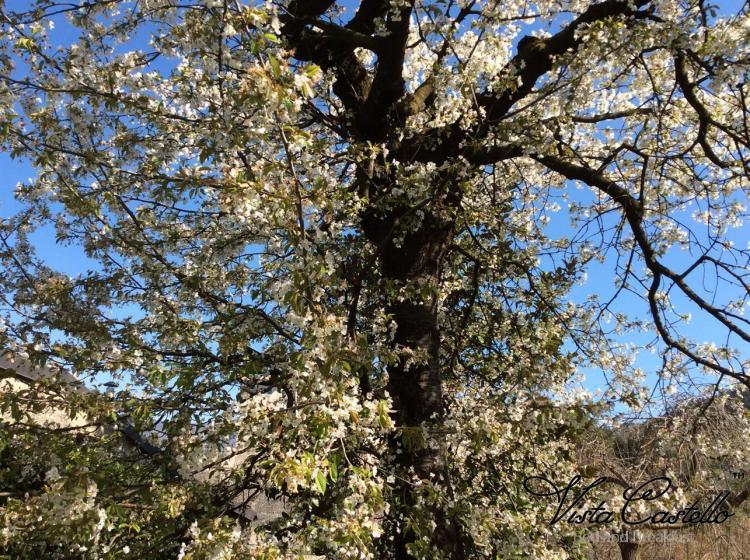 Albero in giardino - B&B Vista Castello