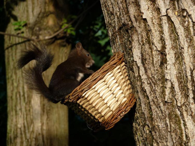 Hotel Sport - scoiattolo nero