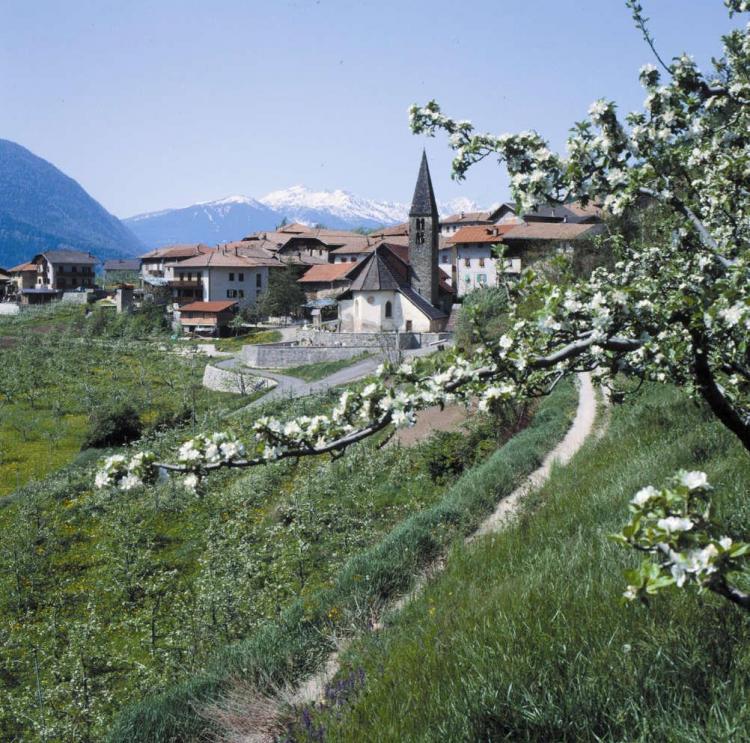 S.Giacomo Estate Ph A. Dalpez