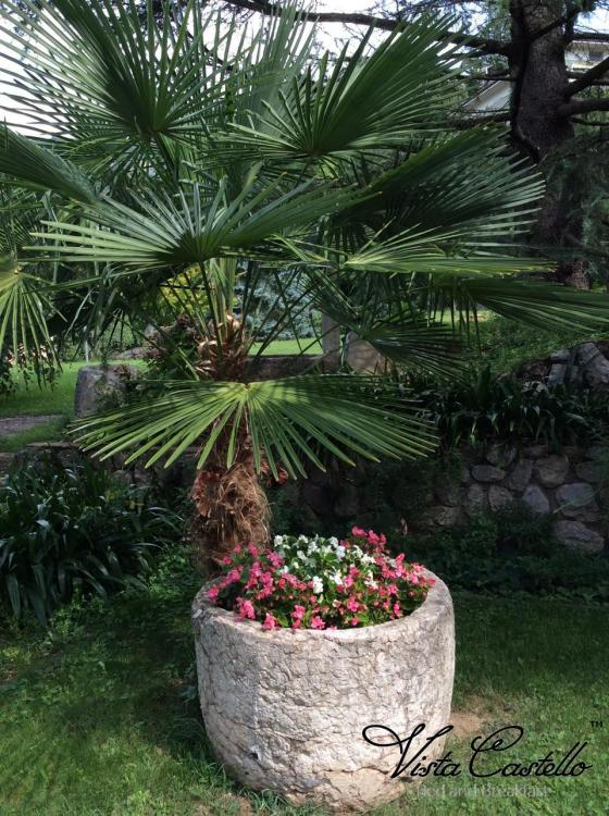 Pianta in giardino - B&B Vista Castello