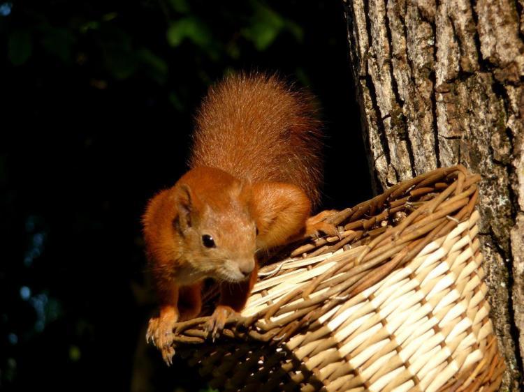 Hotel Sport - scoiattolo rosso
