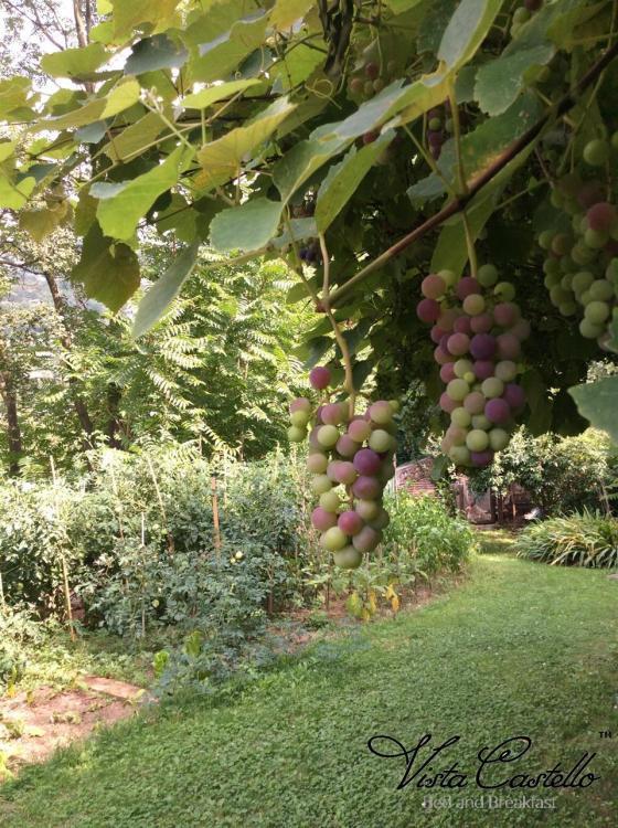 Uva in giardino - B&B Vista Castello