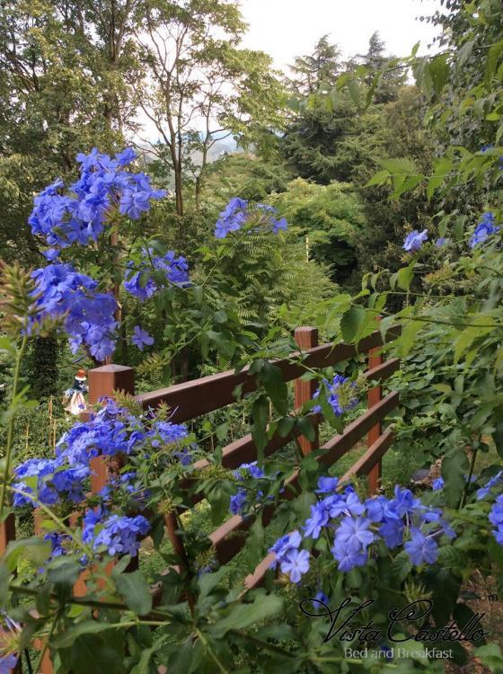 Fiori in giardino - B&B Vista Castello